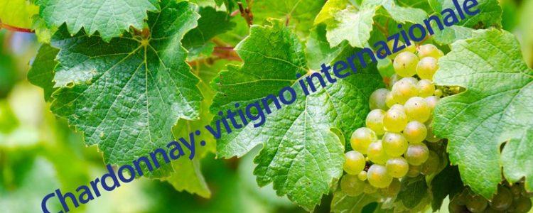 chardonnay-livio-felluga_800x530